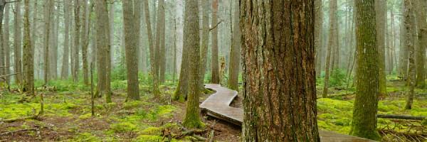 Hemlocks and Hardwoods Trail, Kejimkejik National Park, NS